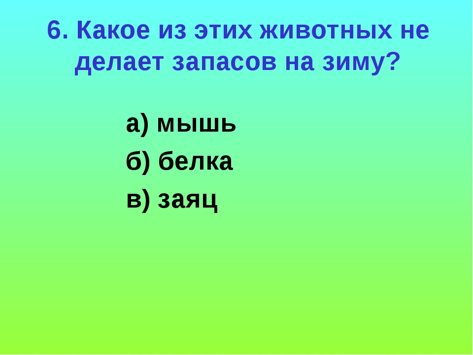 6. Какое из этих животных не делает запасов на зиму? а) мышь б) белка в) заяц