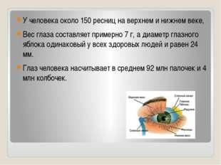 У человека около 150 ресниц на верхнем и нижнем веке, Вес глаза составляет