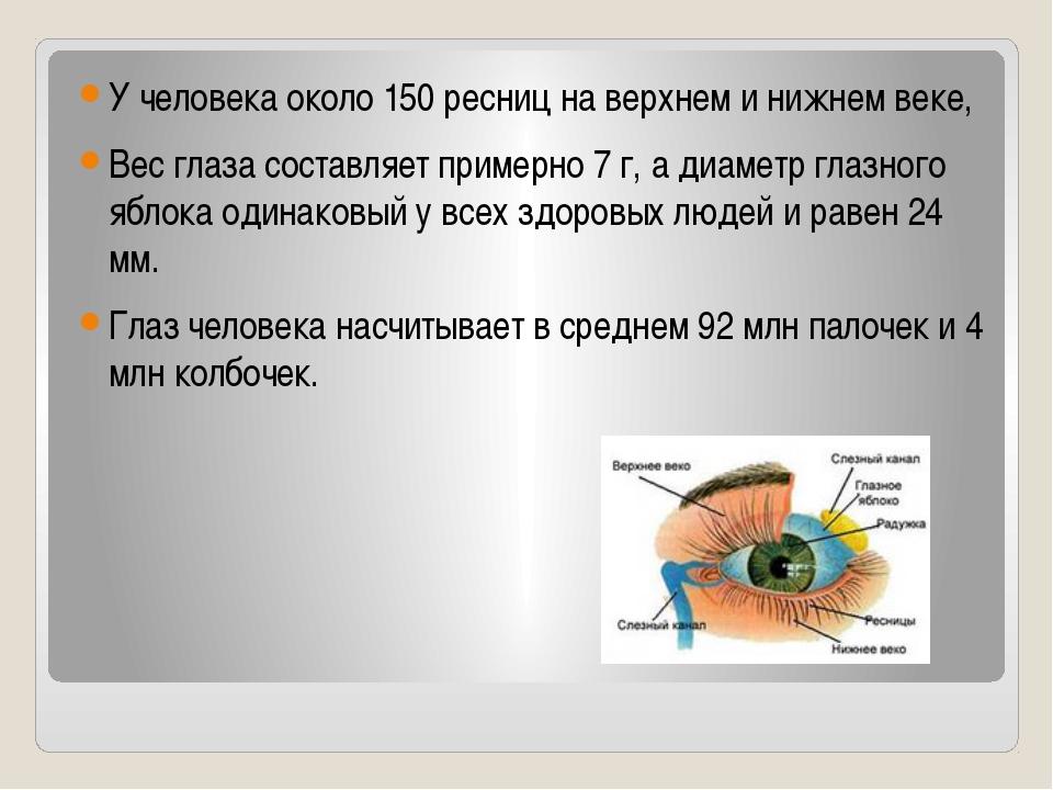 У человека около 150 ресниц на верхнем и нижнем веке, Вес глаза составляет...