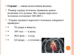 Сердце— самая выносливая мышца. Размер сердца человека примерно равен величи