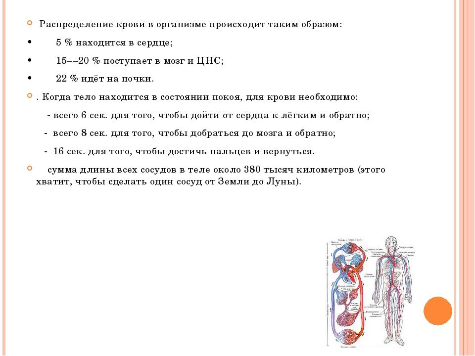 Распределение крови в организме происходит таким образом: •5 % наход...