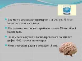 Вес мозга составляет примерно 1 кг 361 гр. 75% от этого веса занимает вода.