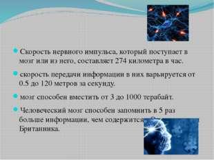 Скорость нервного импульса, который поступает в мозг или из него, составляет