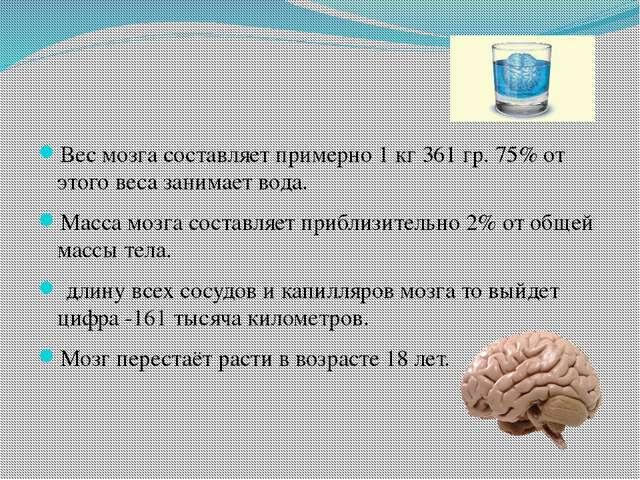 Вес мозга составляет примерно 1 кг 361 гр. 75% от этого веса занимает вода....