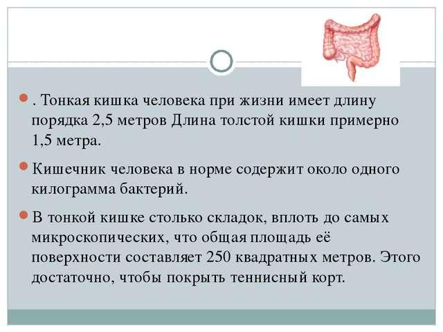 . Тонкая кишка человека при жизни имеет длину порядка 2,5 метров Длина толст...
