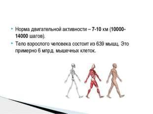 Норма двигательной активности –7-10км (10000-14000шагов). Тело взрослого ч