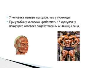 У человека меньше мускулов, чем у гусеницы. При улыбке у человека «работают»