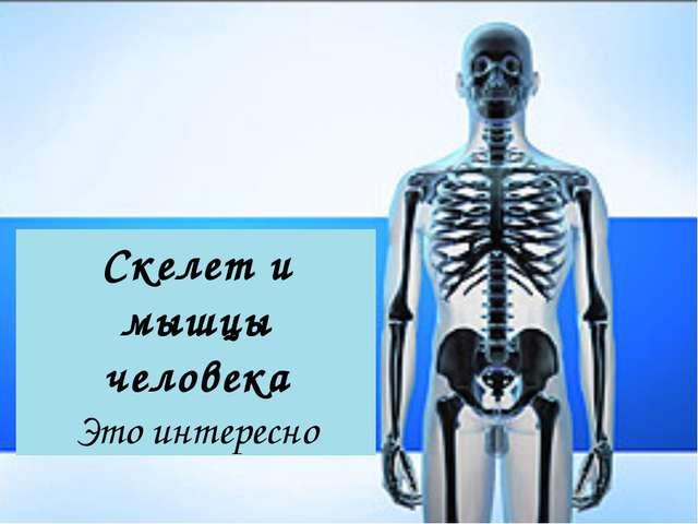 Скелет и мышцы человека Это интересно