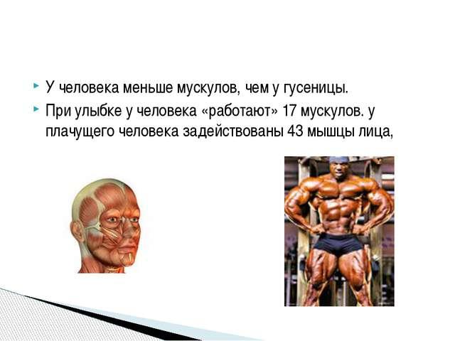 У человека меньше мускулов, чем у гусеницы. При улыбке у человека «работают»...