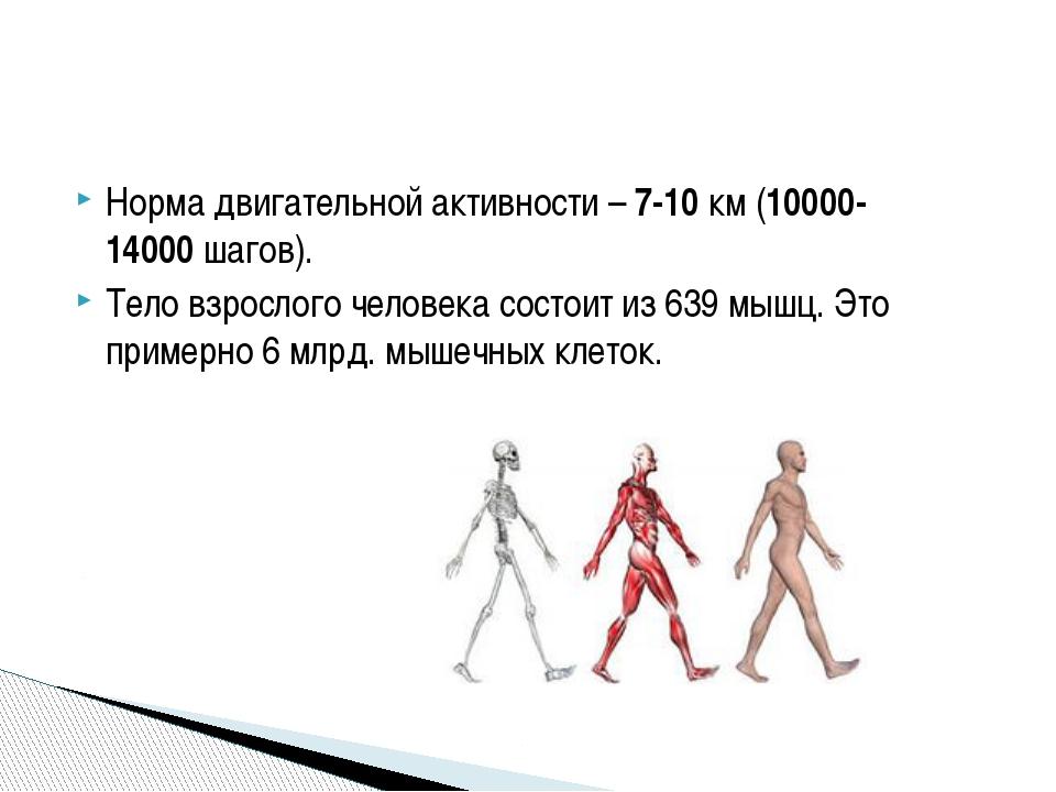 Норма двигательной активности –7-10км (10000-14000шагов). Тело взрослого ч...