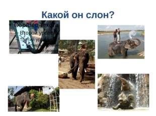 Какой он слон?