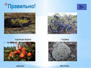 Какая цепь питания относится к тундре…. Растение – заяц -рысь Зерно – суслик