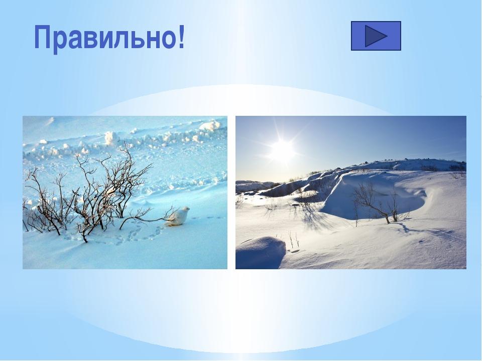 Каковы особенности лета в тундре… Короткое и тёплое лето Жаркое и продолжител...