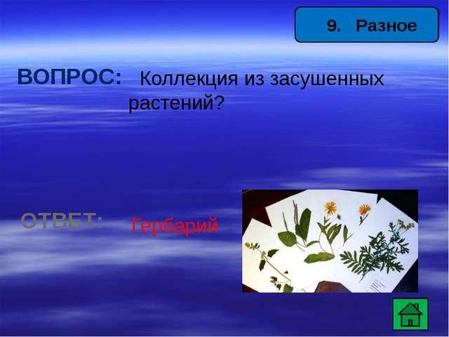 12. Животные ВОПРОС: Самая певчая птица России? ОТВЕТ: Соловей