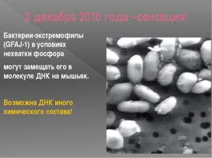 2 декабря 2010 года –сенсация! Бактерии-экстремофилы (GFAJ-1) в условиях нехв