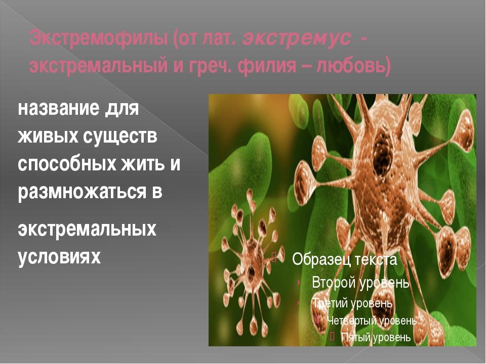 Экстремофилы(отлат.экстремус - экстремальный игреч.филия – любовь) назв...