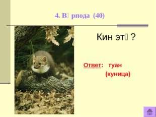 4. Вӧрпода (40) Кин этӧ? Ответ: туан (куница)