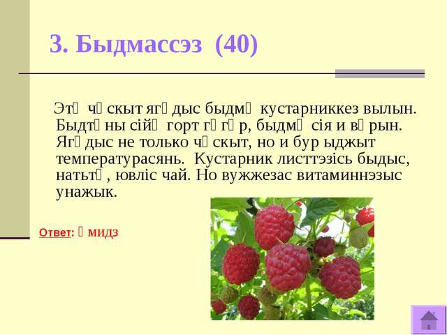 3. Быдмассэз (40) Этӧ чӧскыт ягӧдыс быдмӧ кустарниккез вылын. Быдтӧны сiйӧ го...