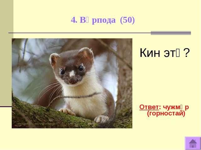 4. Вӧрпода (50) Кин этӧ? Ответ: чужмӧр (горностай)
