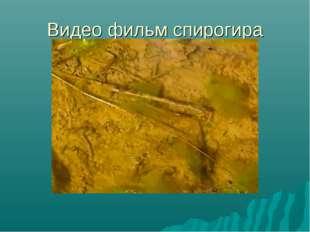 Видео фильм спирогира