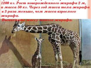 Средний рост жирафа 5м, а средняя масса 1200 кг. Рост новорожденного жирафа 2