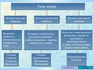 Выводы К эндокринной системе относятся железы внутренней и смешанной секреции