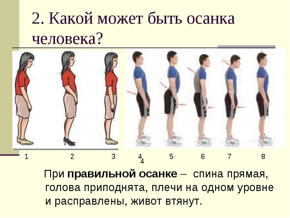 2. Какой может быть осанка человека? При правильной осанке – спина прямая, го...