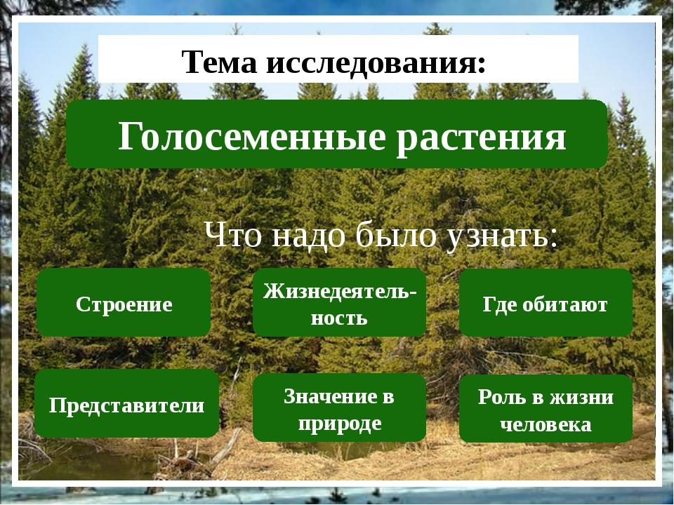 Тема исследования: Голосеменные растения Что надо было узнать: Строение Пред...