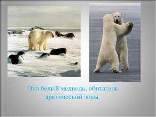 Это белый медведь, обитатель арктической зоны.