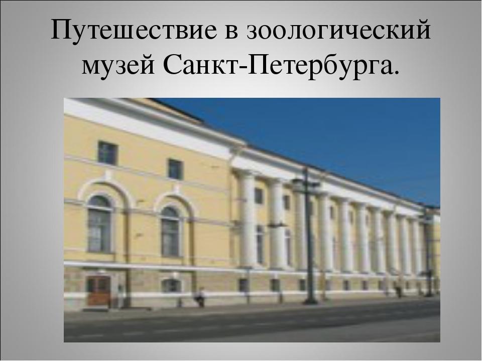 Путешествие в зоологический музей Санкт-Петербурга.