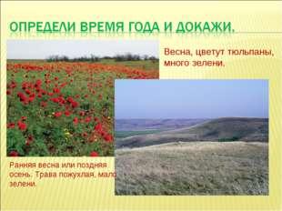 Весна, цветут тюльпаны, много зелени. Ранняя весна или поздняя осень. Трава п