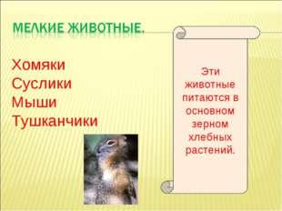 Хомяки Суслики Мыши Тушканчики Эти животные питаются в основном зерном хлебны
