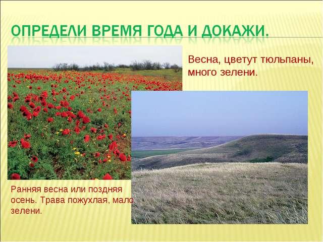 Весна, цветут тюльпаны, много зелени. Ранняя весна или поздняя осень. Трава п...