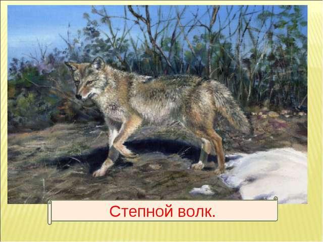Степной волк.