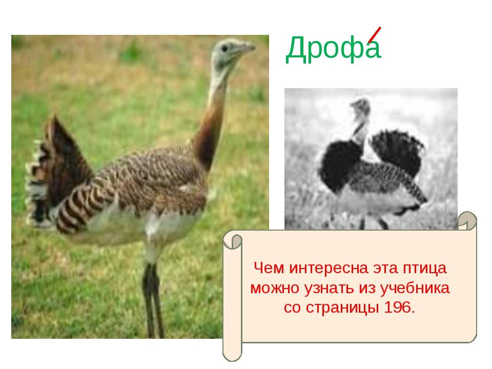 Дрофа Чем интересна эта птица можно узнать из учебника со страницы 196.