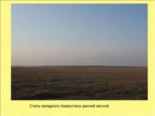 Степь западного Казахстана ранней весной