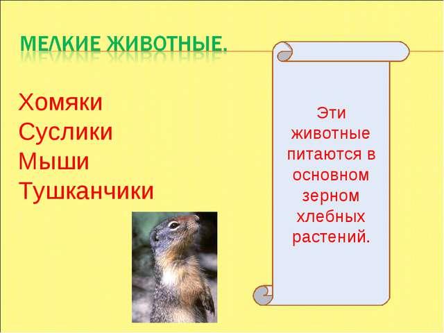 Хомяки Суслики Мыши Тушканчики Эти животные питаются в основном зерном хлебны...
