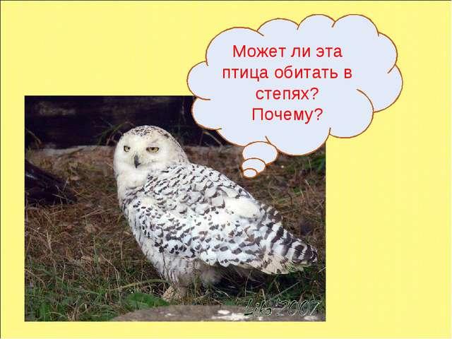 Может ли эта птица обитать в степях? Почему?