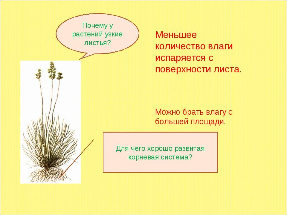 Почему у растений тундры разветвленная корневая система