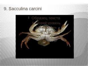 9. Sacculina carcini