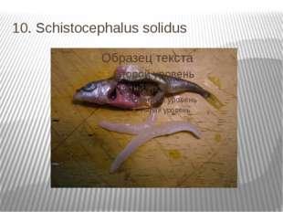10. Schistocephalus solidus