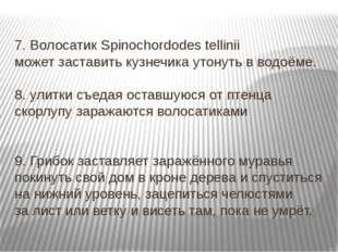 7. Волосатик Spinochordodes tellinii может заставить кузнечика утонуть в водо