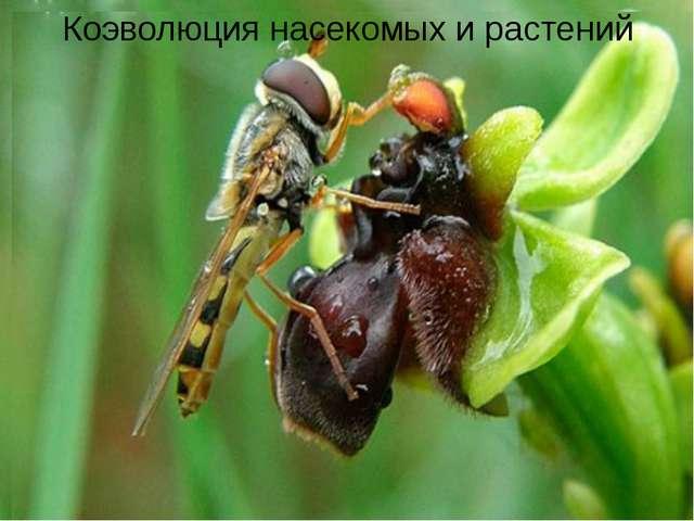 Коэволюция насекомых и растений