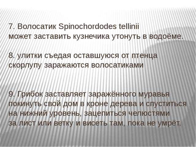 7. Волосатик Spinochordodes tellinii может заставить кузнечика утонуть в водо...