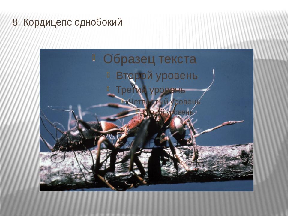 8. Кордицепс однобокий