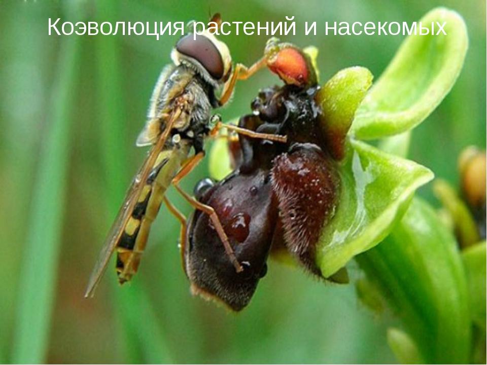 Коэволюция растений и насекомых
