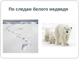 По следам белого медведя