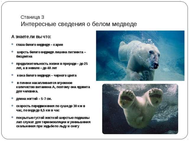 Станица 3 Интересные сведения о белом медведе А знаете ли вы что: глаза белог...