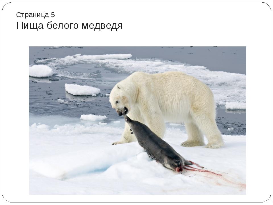 Страница 5 Пища белого медведя