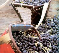 Оливки или маслины в корзине